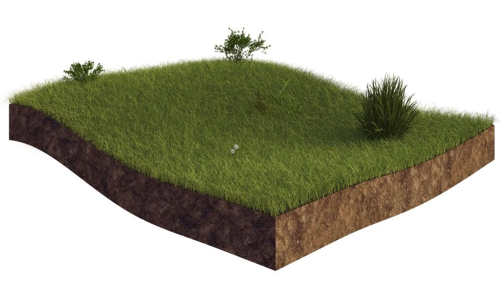 Grass_classique04-1